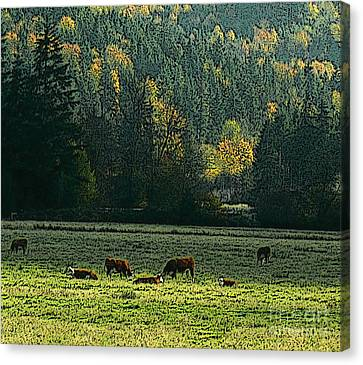 Grazing In The Skokomish Valley Canvas Print