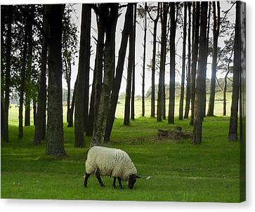 Grazing In The Woods Canvas Print