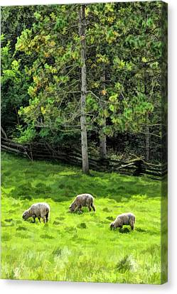 Grazing Sheep At Old World Wisconsin Canvas Print