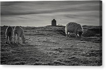 Grazing With The Family Canvas Print by Chris Fletcher