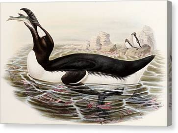 Great Auk Canvas Print by John Gould
