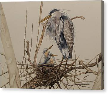 Great Blue Heron And Chicks Canvas Print by Laurie Tietjen
