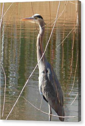 Canvas Print featuring the photograph Great Blue Heron By Willow Tree by Jeanne Kay Juhos