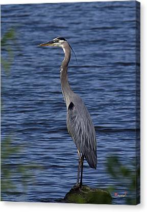 Canvas Print featuring the photograph Great Blue Heron Dmsb0001 by Gerry Gantt