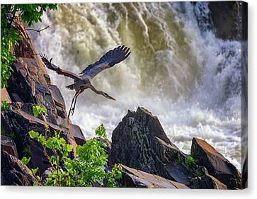 Great Falls Park Canvas Print - Great Blue Heron In Flight by Rick Berk