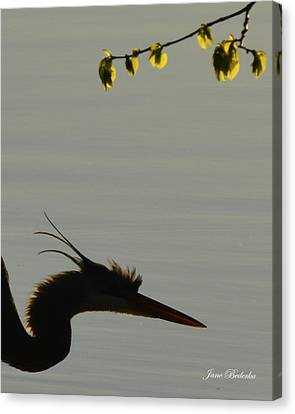 Great Blue Heron In Silhouette Canvas Print by Jane Bederka