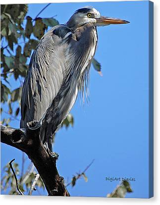 Great Blue Heron Perched Canvas Print by DigiArt Diaries by Vicky B Fuller