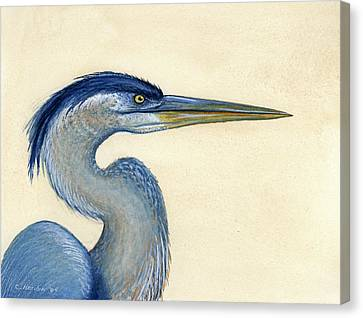 Great Blue Heron Portrait Canvas Print by Charles Harden