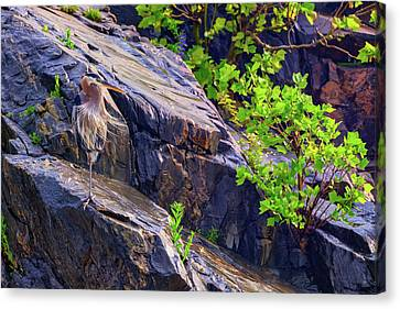 Great Blue Heron Canvas Print by Rick Berk