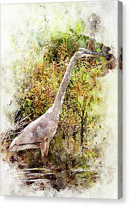 Great Blue Heron W C Canvas Print by Peter J Sucy