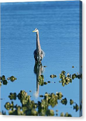 Great Blue Heron Wading Reflection Canvas Print by Gary Langley