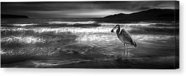 Great Blue Heron Canvas Print by Wesley Allen Shaw