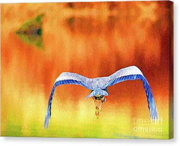 Canvas Print featuring the digital art Great Blue Heron Winging It Photo Art by Sharon Talson