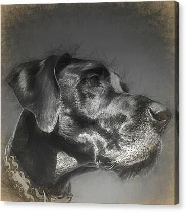 Great Dane I Canvas Print