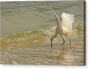 Canvas Print featuring the photograph Great Egret 2 by Nicola Fiscarelli