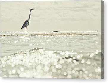 Great Egret Aka Great White Grey Heron In Maldives Canvas Print