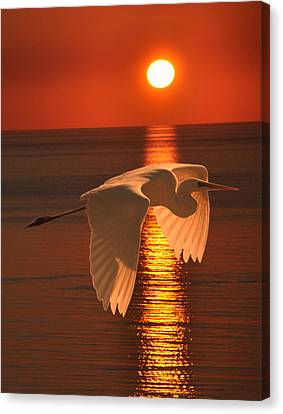 Hera Canvas Print - Great Egret At Sunset by Eric Kempson