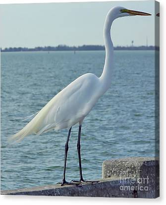 Great Egret At The Gulf Canvas Print