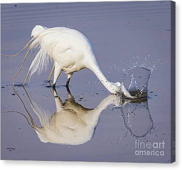 Great Egret Dipping For Food Canvas Print