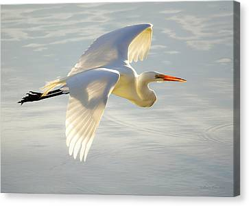 Mill Valley Canvas Print - Great Egret Glow by Brian Tada