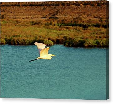 Canvas Print featuring the digital art Great Egret In Flight by Timothy Bulone