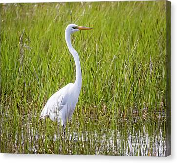Canvas Print featuring the photograph Great Egret In The Spring  by Ricky L Jones