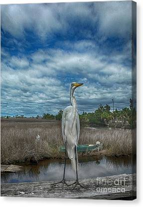 Great Egret Canvas Print by Judy Hall-Folde