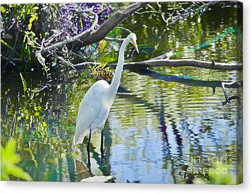 Great Egret On The Hunt Canvas Print