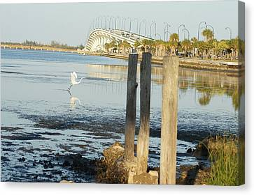 Canvas Print featuring the photograph Great Egret Takes Flight by Lynda Dawson-Youngclaus