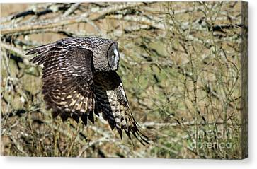 Great Grey Flying Canvas Print by Torbjorn Swenelius