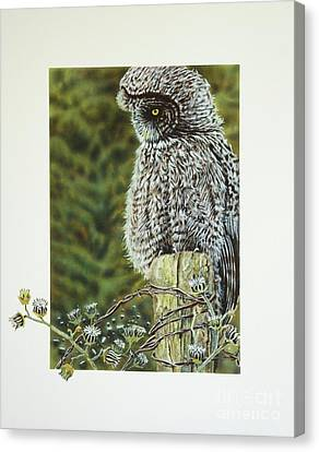 Great Grey Owl Canvas Print by Greg and Linda Halom
