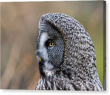 Great Grey's Profile A Closeup Canvas Print by Torbjorn Swenelius
