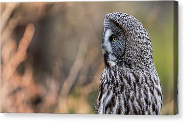 Great Grey's Profile Canvas Print by Torbjorn Swenelius