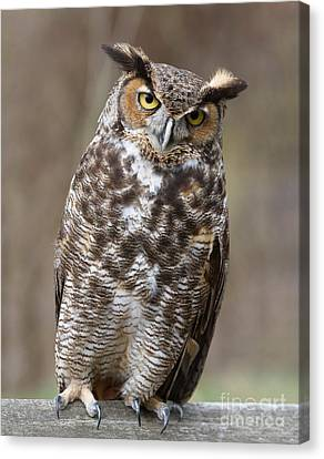 Canvas Print featuring the photograph Great Horned Owl 3 by Chris Scroggins