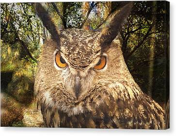 Great Horned Owl 3 Canvas Print