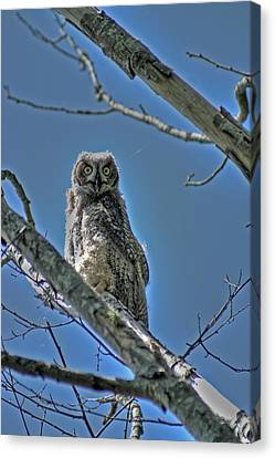 Great Horned Owl Canvas Print by Alexander Rozinov