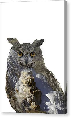 Great Horned Owl And Mammoth Hot Springs Canvas Print