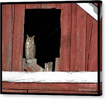 Canvas Print featuring the photograph Great Horned Owl by Daniel Hebard