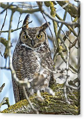 Great Horned Owl Canvas Print by Loree Johnson