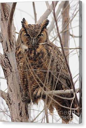 Great Horned Owl Perched Canvas Print by Wingsdomain Art and Photography