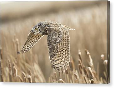 Great Horned Owl Canvas Print by Peter Stahl