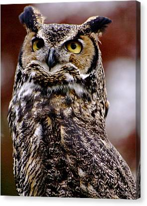 Great Horned Owl Canvas Print by Sonja Anderson