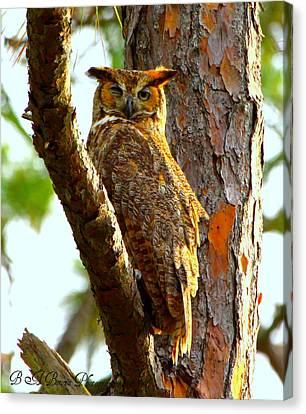 Great Horned Owl Wink Canvas Print by Barbara Bowen