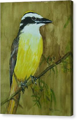 Canvas Print featuring the painting Great Kiskadee by Betty-Anne McDonald