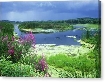 Great Meadows National Wildlife Refuge Canvas Print by John Burk