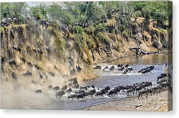 Great Migration Canvas Print by Hua Zhu