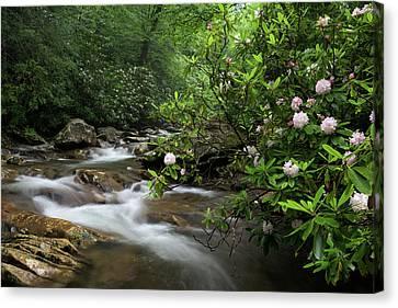 Great Smoky Mountains Rosebay Rhododendron Canvas Print by Mark VanDyke