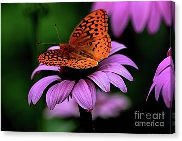 Great Spangled Fritillary Canvas Print by Brenda Bostic
