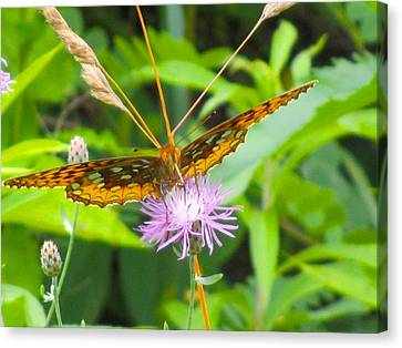 Great Spangled Fritillary Canvas Print by Kendall Kessler