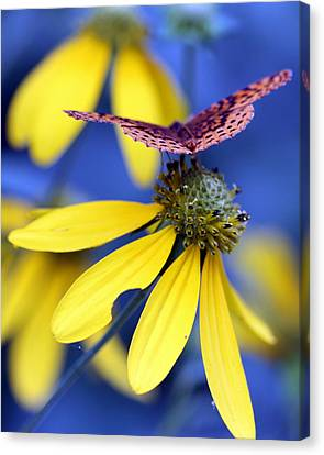 Great Spangled Fritillary On Yellow Coneflower Canvas Print